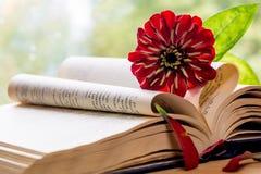 Open Bijbel en bloem Royalty-vrije Stock Fotografie