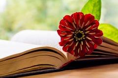 Open Bijbel en bloem Stock Afbeeldingen
