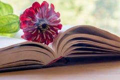 Open Bijbel en bloem Royalty-vrije Stock Afbeelding
