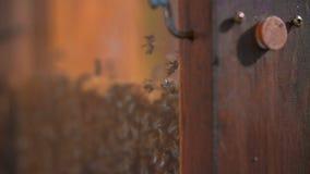Open bijenkorf op vertoning voor toeristen stock videobeelden