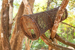 Open birdcage in the tropical forest Royalty Free Stock Images