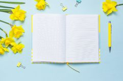 Open blank notebook, pen, clips, spring flowers daffodils narcissus on blue background. Female desktop, Office desk, spring. Concept. Flat lay, top view, copy royalty free stock image