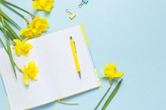 Free Open Blank Notebook, Pen, Clips, Spring Flowers Daffodils Narcissus On Blue Background. Female Desktop, Office Desk, Spring Stock Image - 148305371