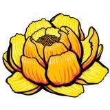 Open bloem van de beeldverhaal de gele lelie Stock Foto