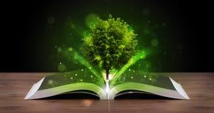 Open boek met magische groene boom en stralen van licht Royalty-vrije Stock Foto