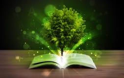 Open boek met magische groene boom en stralen van licht Stock Afbeelding