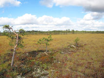 Open bog Royalty Free Stock Photography