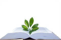 The open book Stock Photography