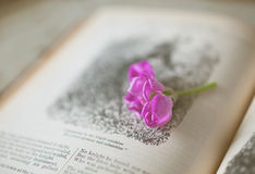 Open Book. Closeup of open book with a live cut flower on the page...very shallow DOF for effect Royalty Free Stock Photography