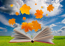 Free Open Book And Maple Leaves Royalty Free Stock Photo - 25308175
