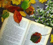 Open book, autumn flowers and leaves on a table. Royalty Free Stock Photography