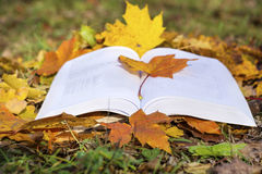 Open book in an autumn garden. Open book on a green grass background with autumn leaves royalty free stock image