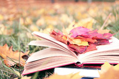 Open book in autumn leaves. Knowledge is power. Education. Enlightenment. Love Royalty Free Stock Photo