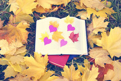 Open book in autumn leaves. Knowledge is power. Education. Enlightenment. Love Stock Photo