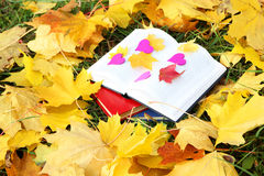 Open book in autumn leaves. Knowledge is power. Education. Enlightenment. Love Stock Photos