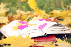 Open book in autumn leaves. Knowledge is power. Education. Enlightenment. Love Stock Image