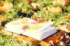 Open book in autumn leaves. Knowledge is power. Education. Enlightenment. Love Royalty Free Stock Image