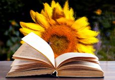 Open book on the background of sunflowers stock photo