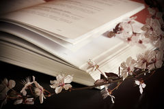 Open book and blossom branch Stock Photos