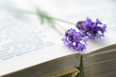 Open book with blue lavender Stock Photo