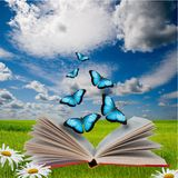 Open book and  butterflies Stock Photos