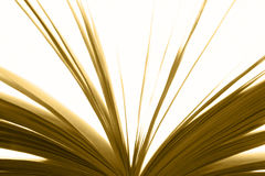 Open book detail with sheets in warm tone Stock Photos