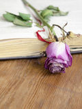 Open book and dry rose Royalty Free Stock Photography
