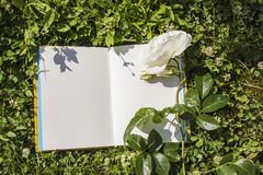 An open book with empty pages, a white rose flower and a green clover. Romantic concept. Copy space royalty free stock photography