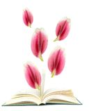 An open book with flower petals Stock Photos