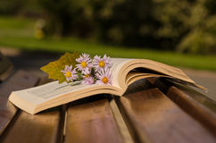 Open book with flowers on the bench Stock Photos