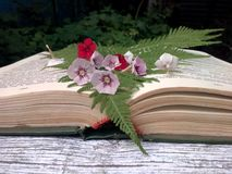 Open book. With flowers and ferns Stock Images