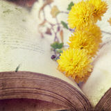 Open book with flowers. Open book with yellow flowers Royalty Free Stock Photo