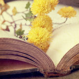 Open book with flowers. Open book with yellow flowers Royalty Free Stock Photos