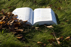 Open book on grass Royalty Free Stock Photos
