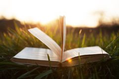 Open book on grass under the sun Royalty Free Stock Images