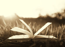 Open book on grass under the sun Royalty Free Stock Image