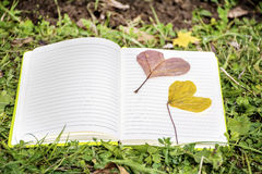 Open book on a green grass   with autumn heart-shaped leaves Stock Photos