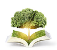Open book with green tree Stock Photo
