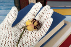 Open book, hardback books on wooden table, rose and white gloves knitted crochet Back to school. Copy space for text. Stock Photos