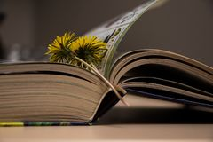 Open book with ilustration and yellow flower. Dandelion Stock Photography