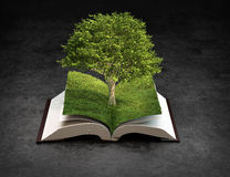 Open book of knowledge Royalty Free Stock Images