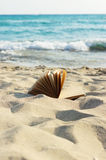 Open book laying on a sandy beach. Stock Photo