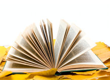Open book on leaves royalty free stock images