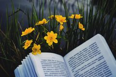 Book and nature. An open book lies on a bush of green grass, and take a lake Royalty Free Stock Photo