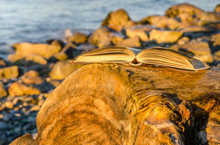 Open Book on a Log Stock Images