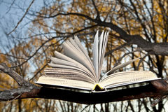 Open book lying on a branch. On a background of autumn park Stock Photography