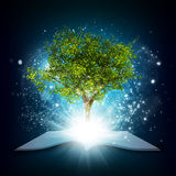 Open book with magical green tree and rays of Royalty Free Stock Photo