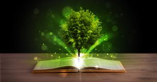 Open book with magical green tree and rays of light. On wooden deck royalty free stock photography