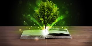 Open book with magical green tree and rays of light. On wooden deck stock photos