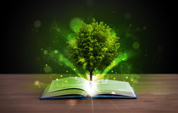 Open book with magical green tree and rays of light. On wooden deck royalty free stock images